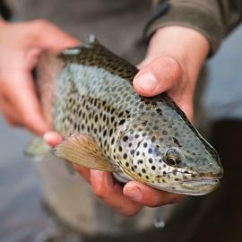 Емкости для разведения рыбы