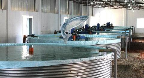 Размещение емкостей для разведения рыбы в зданиях, емкости для разведения рыбы в зданиях