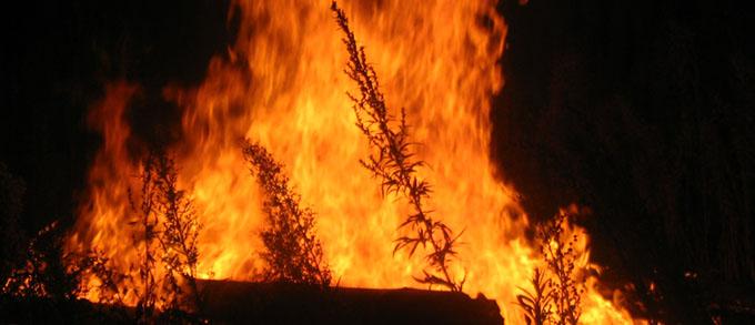 Пожежі в степах і лісах