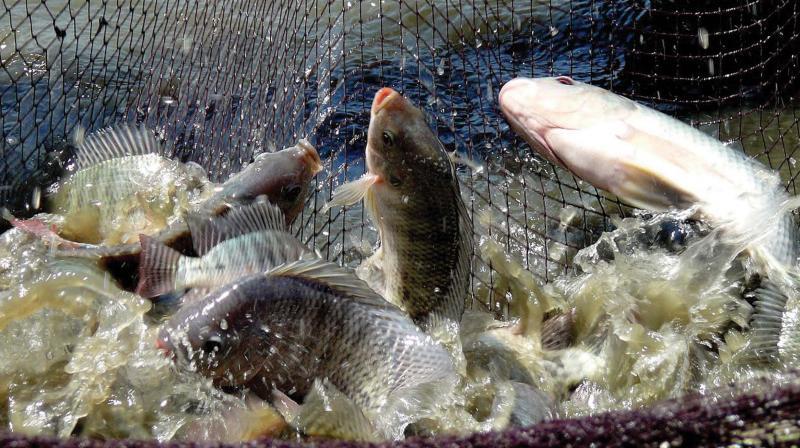 рибництво